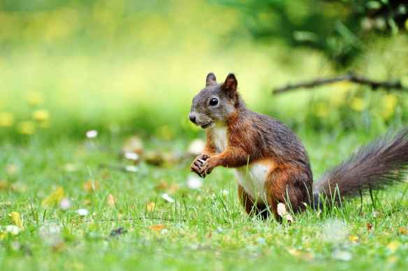 adorable animal animal photography blur